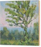 Adirondack Tree Wood Print