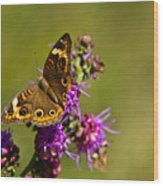Admiral Butterfly  Wood Print