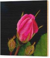 Admirers Wood Print