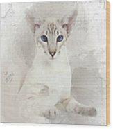 Adorable Blue-eyed Oriental Cat  Wood Print