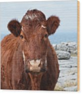 Adorable Brown Cow Standing On The Burren Wood Print