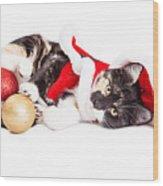 Adorable Christmas Calico Santa Kitty Wood Print
