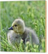 Adorable Goose Chick Wood Print