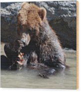 Adorable Grizzly Bear Playing With A Maple Leaf While Sitting In Wood Print