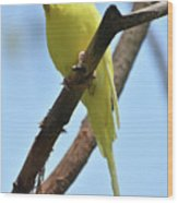 Adorable Little Yellow Parakeet In A Tree Wood Print