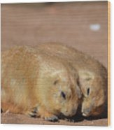 Adorable Pair Of Prairie Dogs Cuddling Together Wood Print