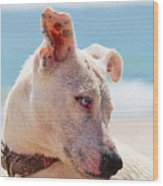 Adorable Small Dog On The Beach Wood Print