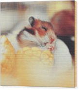 Adorable Tiny Hamster Pet Feasting On Corn Wood Print