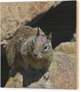 Adorable Up Close Look Into The Face Of A Squirrel Wood Print