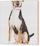 Adorable Young Mixed Breed Puppy Dog Wood Print