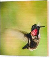 Adult Male Ruby-throated Hummingbird Wood Print