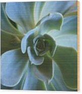 Aeonium Wood Print