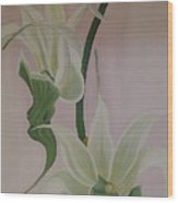 Aeranthes Peyrot Orchide Wood Print