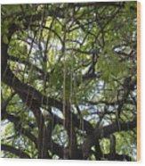 Aerial Network I Wood Print