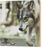 Aero Wolf 1 Wood Print