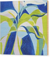 Aethiopica Wood Print
