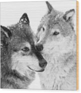 Affection Of Wolves Wood Print