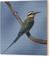 African Bee Eater Wood Print