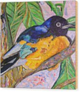 African Blue Eared Starling Wood Print