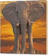 African Bull Elephant At Sunset Wood Print