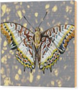 African Butterfly Wood Print