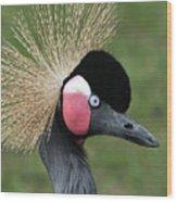 African Crowned Crane #7 Wood Print