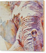 African Elephant _ The Governor Wood Print