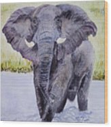 African Elephant Crossing The Chobe River Wood Print