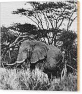 African Elephant Wood Print