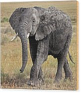 African Elephant Happy And Free Wood Print