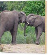 African Elephants Interacting Wood Print