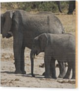 African Elephants Mother And Baby Wood Print
