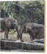 African Elephants_hdr Wood Print