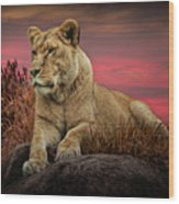 African Female Lion In The Grass At Sunset Wood Print