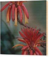 African Fire Lily Wood Print