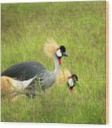 African Gray Crown Crane Wood Print