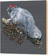 African Grey Parrot A Wood Print