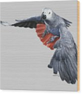 African Grey Parrot Flying Wood Print