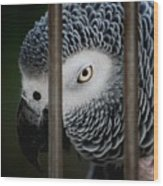 African Grey Wood Print by Robert Meanor