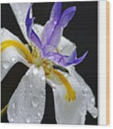 African Iris Wood Print