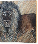 African Lion 2 Wood Print by Nick Gustafson