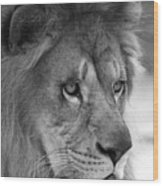 African Lion #8 Black And White Wood Print