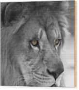 African Lion #8 Black And White  T O C Wood Print