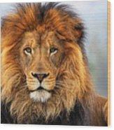 African Lion 1 Wood Print