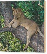 African Lion Panthera Leo On Tree, Lake Wood Print