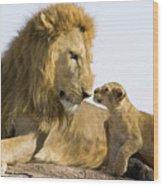 African Lion Panthera Leo Seven Wood Print