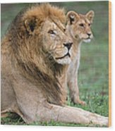 African Lion Panthera Leo With Its Cub Wood Print