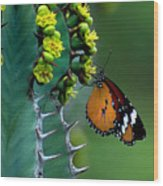 African Monarch On Cactus Wood Print