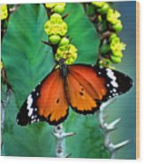 African Monarch Wood Print