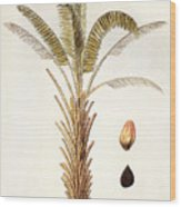 African Oil Palm Wood Print